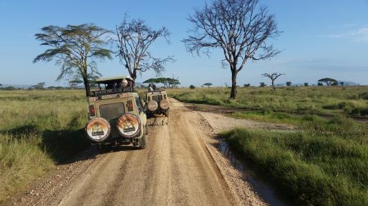 15-serengeti