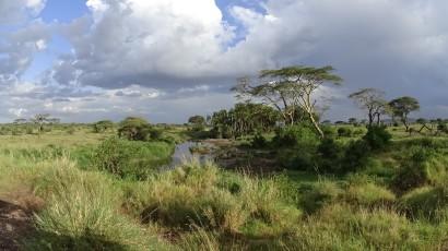 18-serengeti