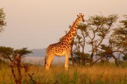 22-serengeti