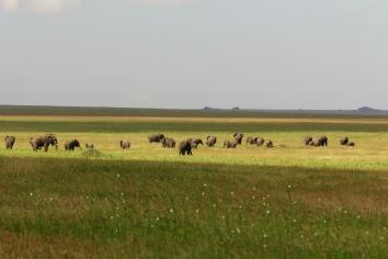 25-serengeti