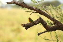 28-serengeti