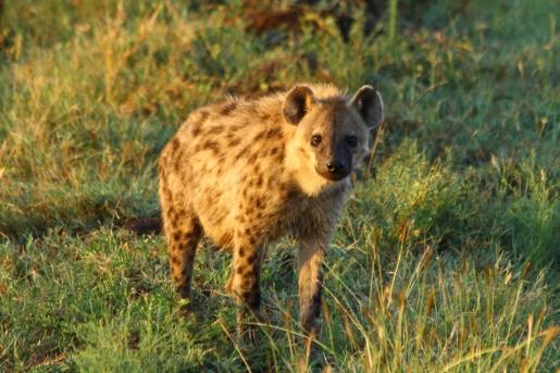 34-serengeti