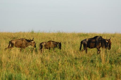 35-serengeti