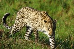 36-serengeti
