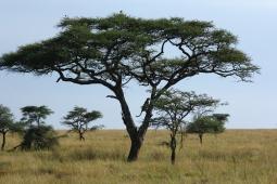 37-serengeti