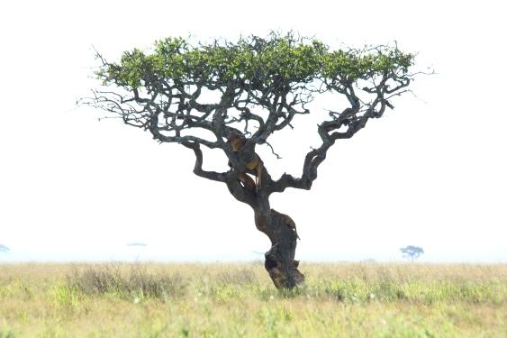 38-serengeti