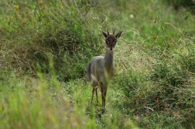 39-serengeti