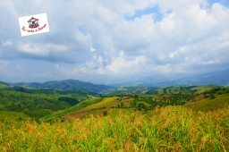 42-route-phu-chi-fa-thailande