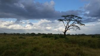 43-serengeti