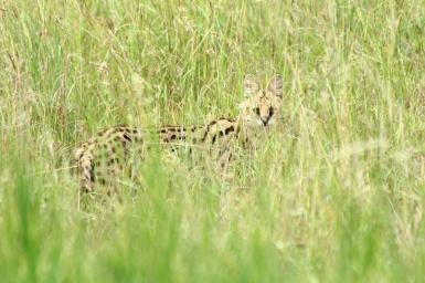 44-serengeti