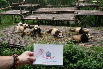 7-reserve-panda-chengdu-chine